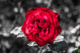 spot colour photography