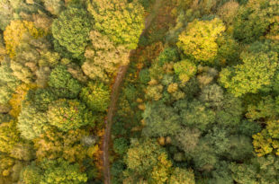 aerial photography, forest seen from above