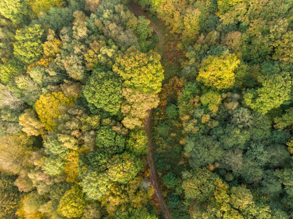 forest aerial photography, taken with DJI MAVIC AIR DRONE