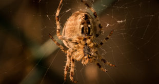 Macro photography spider, creative ideas to photograph