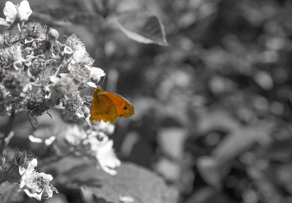butterfly spot colour photograph