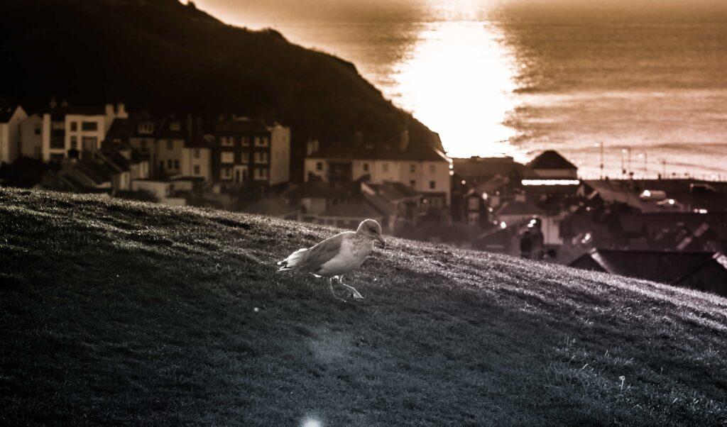 creative ideas to photograph - golden hour
