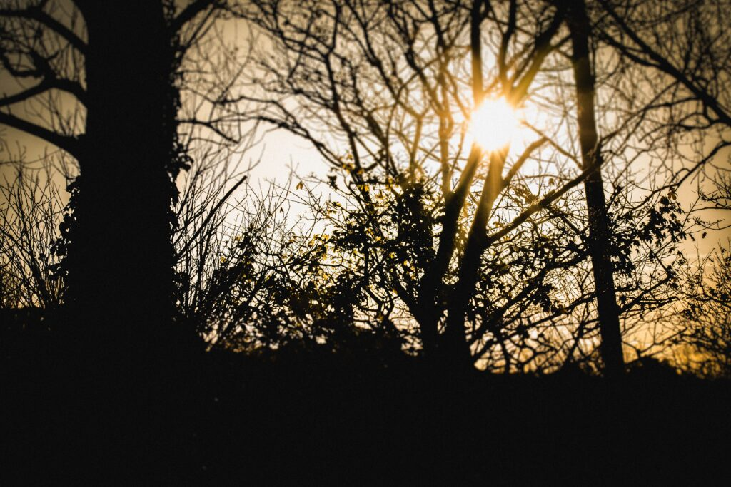 Tree silhouette - creative ideas to photograph
