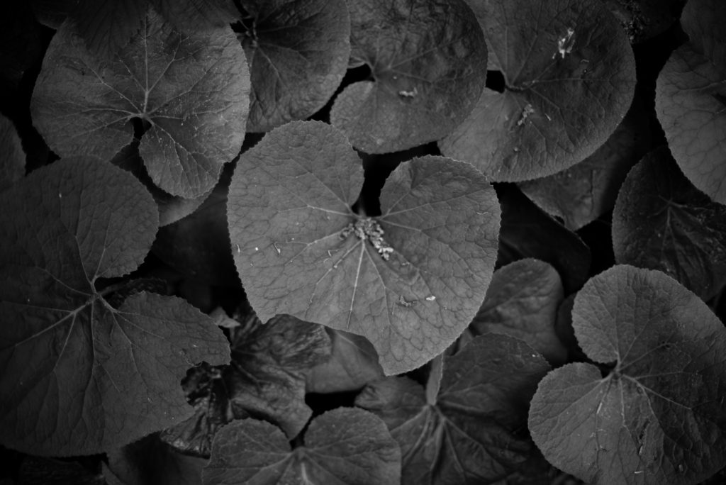 50mm Nature Photography - How to Capture Nature with a 50mm Lens